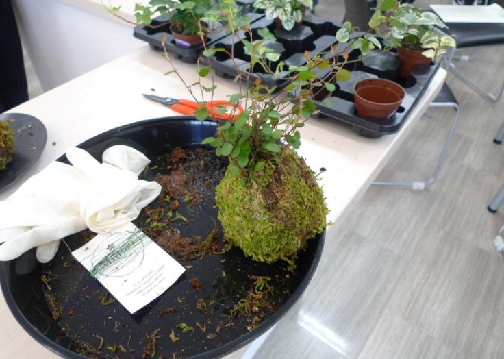 広島の注文住宅はマリモハウスへ。こけ玉作りイベントで魅力を取材!